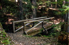 Old Bridge. Wooden Bridge in the Redwoods Royalty Free Stock Images