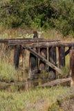 Old bridge. Old destroyed abundant wooden bridge and creek Royalty Free Stock Photography