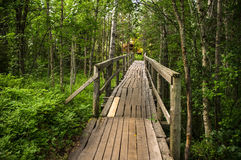Old bridge through the forest. Old repaired bridge with railings through the forest royalty free stock photos