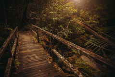 Old Bridge in jungle. Nature rain forest. Tropical Rainforest Landscape. Malaysia, Asia, Borneo, Sabah. Old Bridge in jungle. Nature rain forest. Tropical Stock Photo