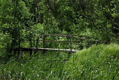 Old Bridge. Old primitive wooden bridge on footpath trough wild forest at summer sunny day Stock Image