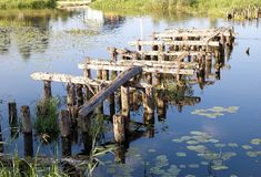 Old  bridge's ruins, logs in water. Selizharovka river, Seliger, Russia Royalty Free Stock Images