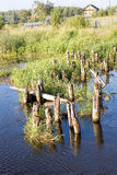 Old  bridge's ruins, logs in water (2). Old  bridge's ruins, logs in water, Selizharovka river, Seliger, Russia (2 Royalty Free Stock Photo
