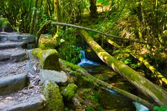 Old bridge of tree crossing a small waterfall, and steps made of. Stone in middle of the forest royalty free stock photo