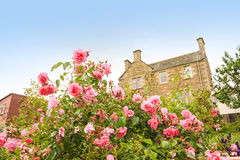Old, British house with window and climbing roses Royalty Free Stock Photography