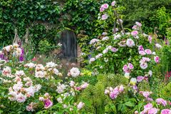 Old British rose garden royalty free stock photography