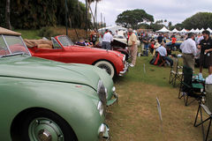 Old british sports cars in lineup Stock Images