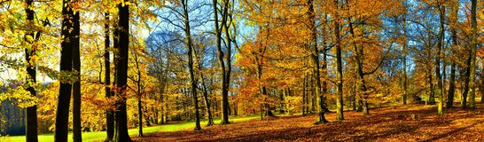 Old broad leaf probably beech trees in the park at autumn afternoon daylight. Foliage. Red, yellow.Panoramic image.South Moravia,Europe stock photo