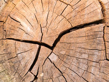 Old broken bark Stock Photo