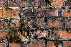 Old broken brick crumbling fence, covered with moss Abstract red brick old background texture of wall. Ruins of uneven crumbling r royalty free stock photo