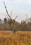 Old broken dead bare dry burnt tree Stock Photos