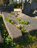 Old broken grave taken over by nature in the sun Royalty Free Stock Images