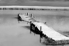 Old broken jetty. In river in monochrome Royalty Free Stock Photography