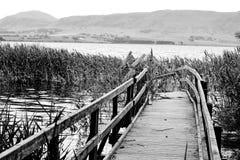 Old Broken Pier Stock Photography