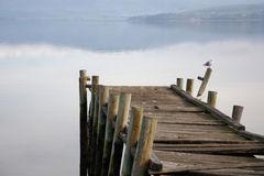 Old broken pier with seagull Royalty Free Stock Photography