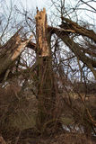 Old broken tree. In the foreground is broken tree, leaves and twigs. In the background is pond Royalty Free Stock Photos