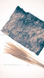Old brown paper and wheat vintage style Stock Image