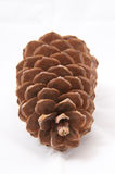 Old and brown pine cone and its leafs on white background Stock Photo
