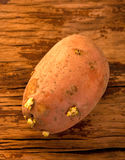 Old brown potato Stock Photo