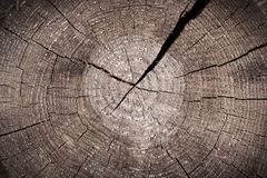 Old brown trunk cut with cracked annual rings Royalty Free Stock Images