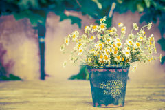 Old bucket with daisies flowers bunch on wooden table over garden wall Stock Photography