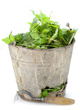 Old  bucket full of garden weeds Stock Photo