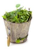 Old  bucket full of garden weeds Stock Photo