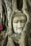 Old Buddha Royalty Free Stock Photo