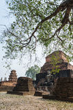 Old Buddha statue in the ancient place with branch of tree in foreground Royalty Free Stock Photography