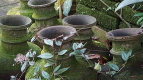 Old Buddhist vases Stock Image