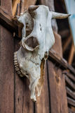 Old buffalo skull. Hanging on a wooden door Royalty Free Stock Photography