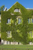 Old building. Wall of old building, covered by ivy in sunlite Royalty Free Stock Photo