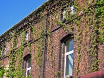 Old building. And plants royalty free stock image
