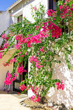 Old building with bougainvilla flowers. In Portugal Royalty Free Stock Photography