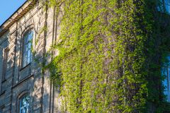 Old building covered with brushwood, the victory of nature over the building stock photos