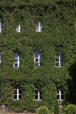 Old building covered with ivy Royalty Free Stock Photo
