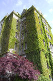 Old building covered with ivy Stock Photo