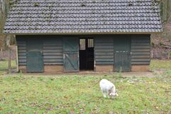 Old building in a petting zoo. An old building in a Dutch petting zoo standing in a grass field royalty free stock photos