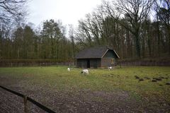 Old building in a petting zoo. An old building in a Dutch petting zoo standing in a grass field stock photo