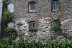 Old building with flowers growing below the windows Royalty Free Stock Image
