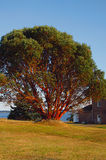 Old Building Near Water. A photograph of a building near a waterway.  The large tree in the picture is a Pacific Madrone tree.  The Pacific Madrone (Latin Name Stock Photo