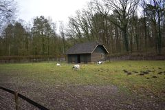 Old building in a petting zoo. An old building in a Dutch petting zoo standing in a grass field stock image
