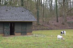 Old building in a petting zoo. An old building in a Dutch petting zoo standing in a grass field with a fence around it royalty free stock photos