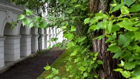 Old building with round arches on the background of trees with large green foliage. Old building with round arches, white columns surrounded by trees in the stock video