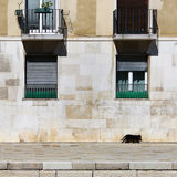Old building stone wall with windows and walking cat. The stone wall of an old building from Venice with details of windows and balconies and a small black cat Royalty Free Stock Photography