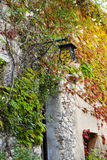 An old building wall covered with vines in autumn colors Royalty Free Stock Photography
