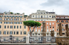 Old buildings on the background of the ruins and pine trees in ancient Rome Stock Photos