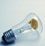 Old bulb. With brain on white paper Royalty Free Stock Image