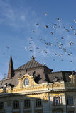 Old bulding and flying pigeons Stock Image