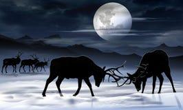 Old Bull Elks Fight Illustration Stock Photos